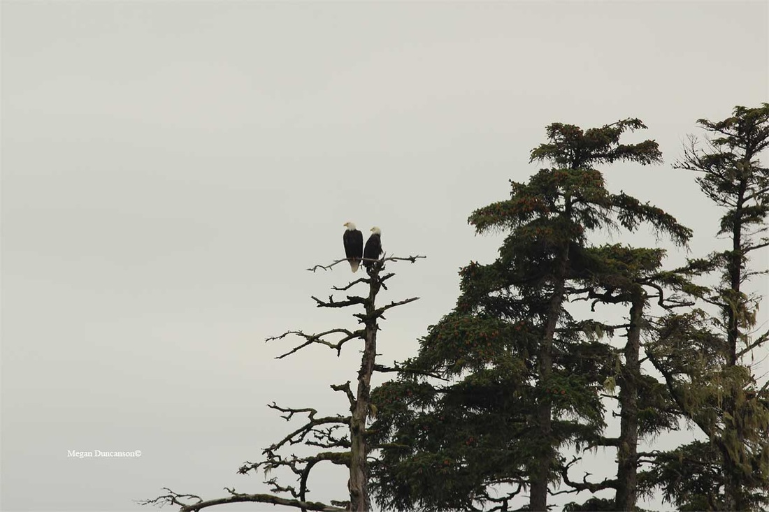 Alaskan Eagles